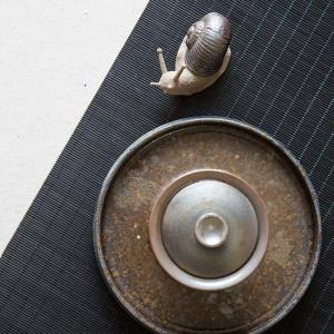 snail-teapet-8