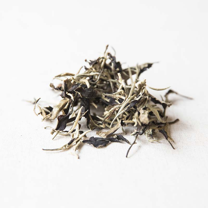 giant-white-yue-guang-bai-moonlight-white-tea-3