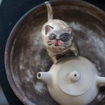 cat-gang-tea-pet-14