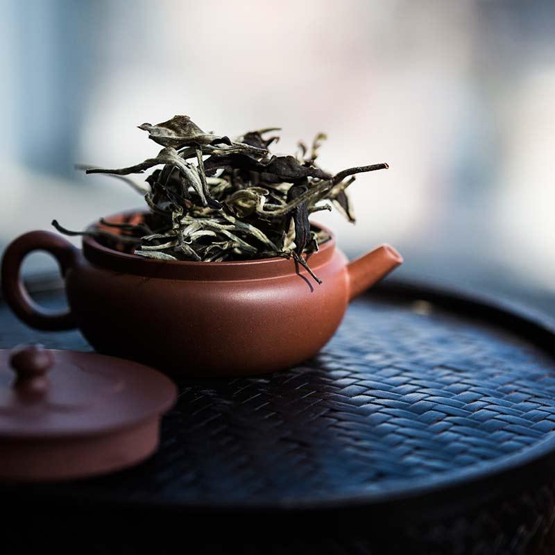 vaste-yixing-zini-teapot-13