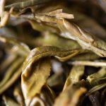 Liquid Sunshine 2019 Fengqing Yellow Tea