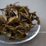 guanyang-exp-2018-fuding-baimudan-white-tea-2