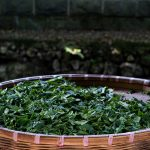 Private Order: 2020 Shifeng Longjing/Dragonwell Green Tea