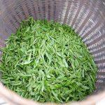 2021-shifeng-longjing-green-tea-2